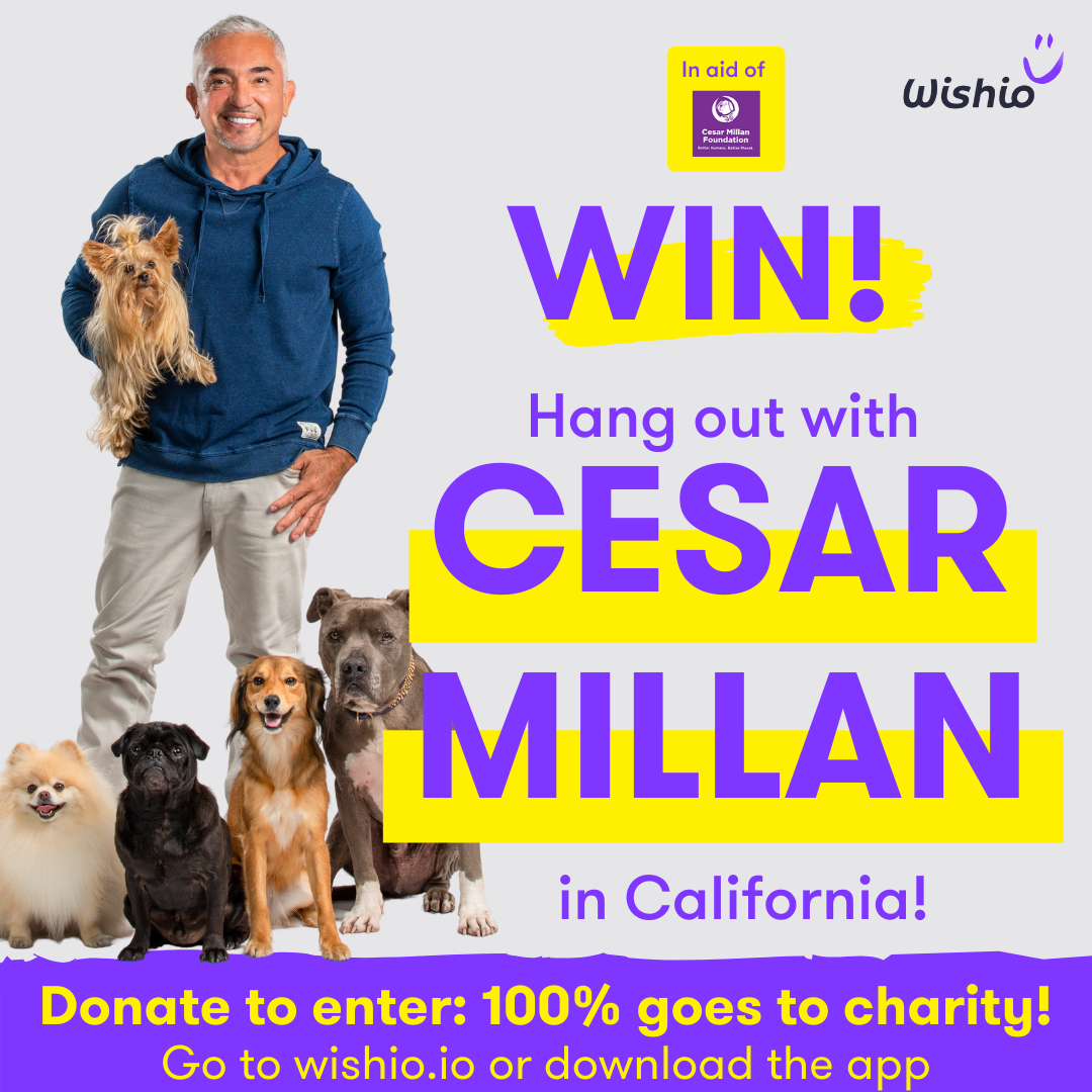 Enter Cesar Millan's Dog Training Giveaway!